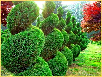 Как правильно проводить обрезку и формирование хвойных растений