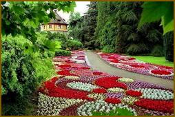 Все цветы для сада