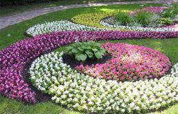 Без однолетних в саду не обойтись...